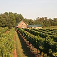Autumn Creek Vineyard