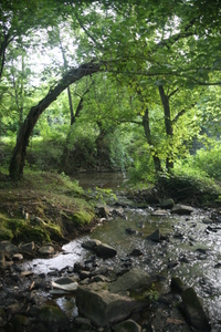 Creek_trees